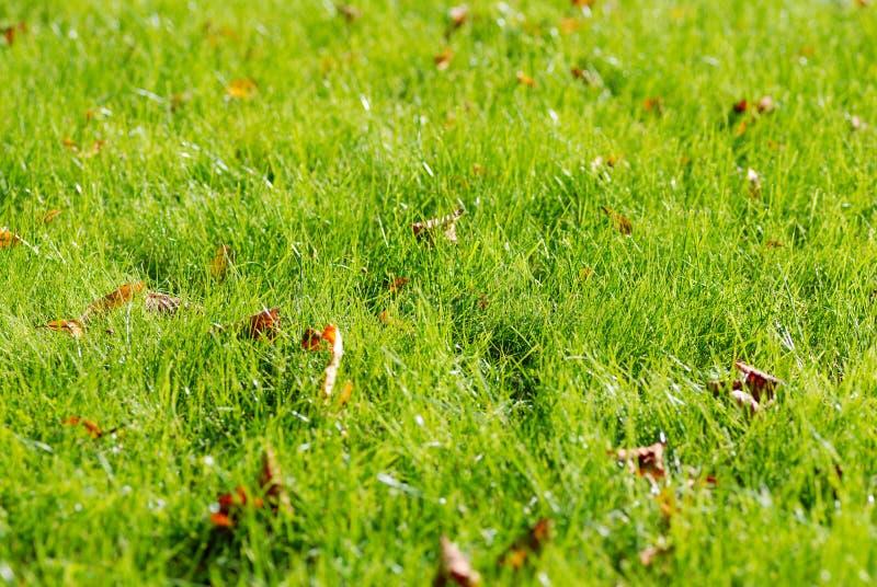 Fresh autumn grass royalty free stock image