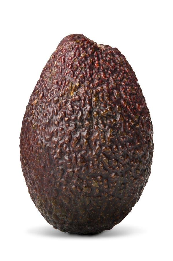 Download Fresh avocado fruit stock photo. Image of rough, natural - 19163510