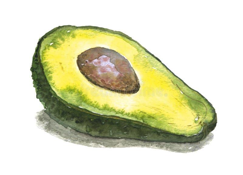 Fresh avocado. Watercolor illustration royalty free stock images