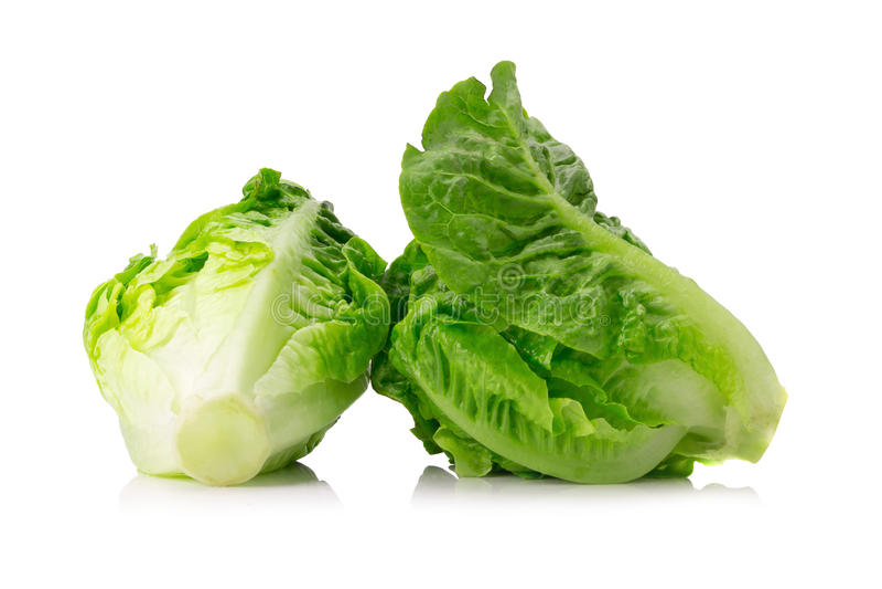 Fresh baby cos lettuce on white background royalty free stock photos