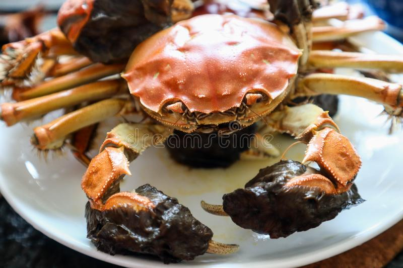 Fresh baked crab in the plate royalty free stock photography