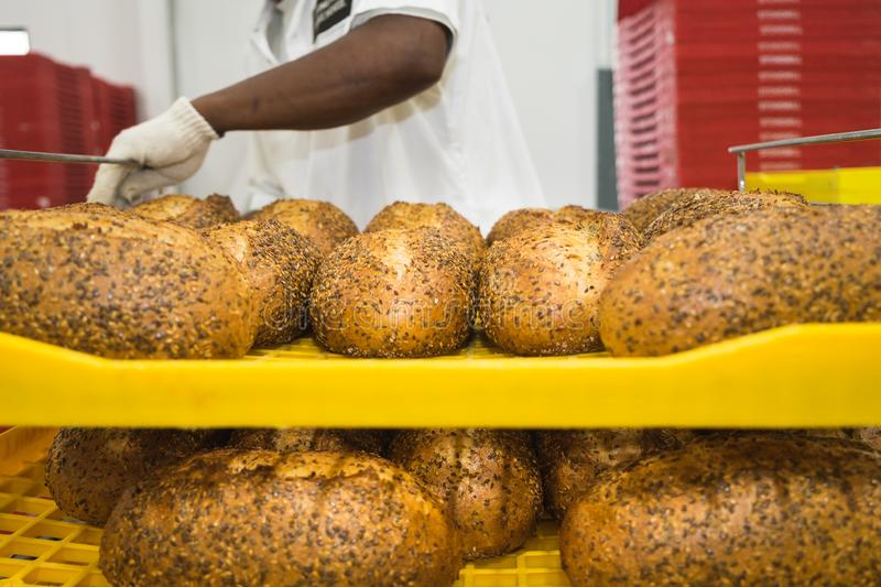 Fresh baked loaves of bread on racks. Fresh baked loaves of multigrain bread set out to cool on racks royalty free stock photos