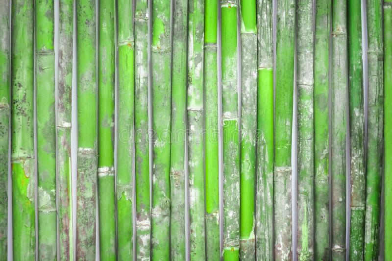 Fresh bamboo fence background,wooden wall stock photos