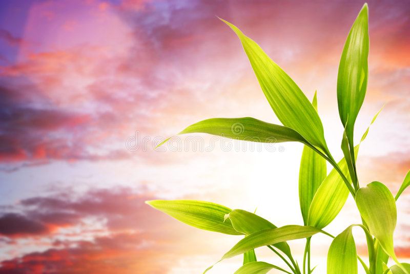 Download Fresh bamboo leaves stock image. Image of natural, cloud - 8815129
