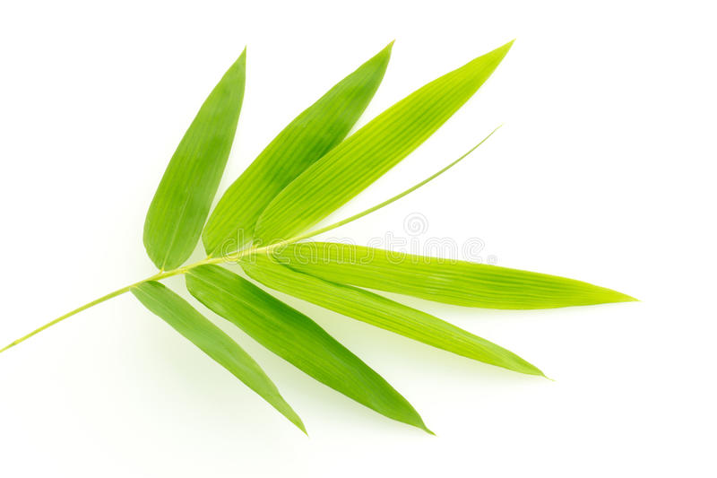 Fresh bamboo leaves border isolated on white background, botanic royalty free stock photos
