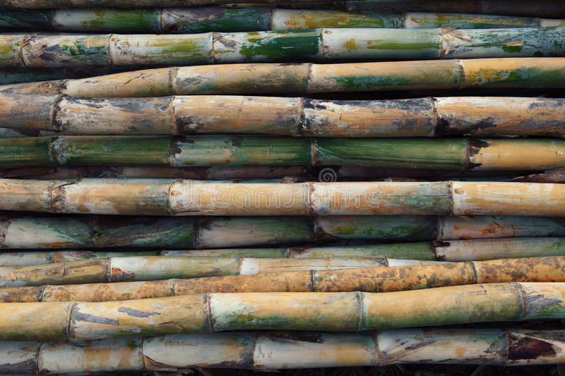 Fresh bamboo wood for multipurpose. In the factory royalty free stock photography
