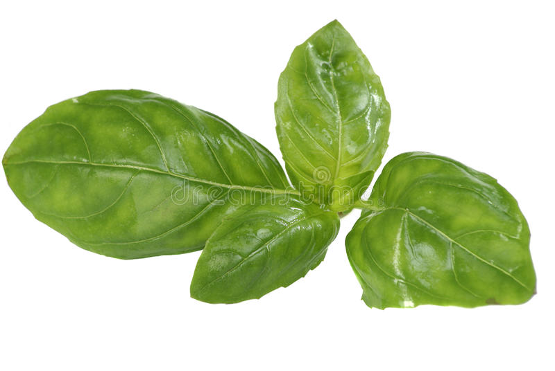 Download Fresh basil stock image. Image of herb, isolated, healthy - 26274201