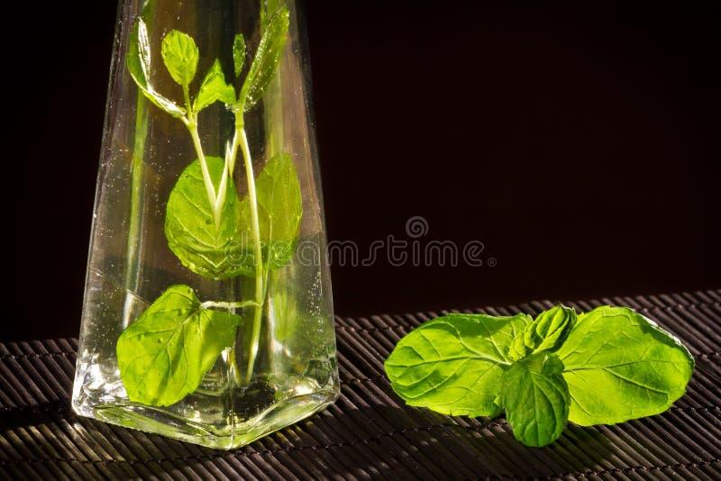 Fresh basil in bottle with vegetable oil stock image