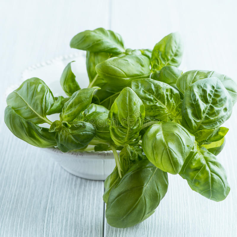 Fresh basil on kitchen table stock photos