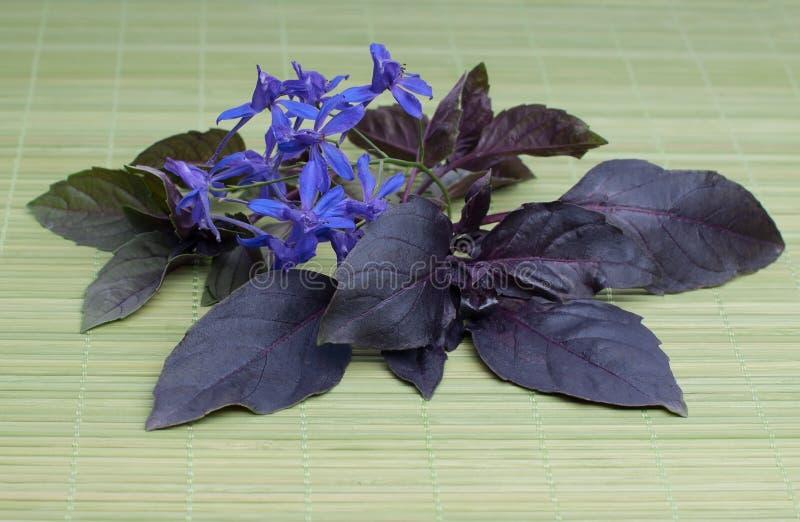 Download Fresh basil leaves stock illustration. Illustration of leaves - 35806811
