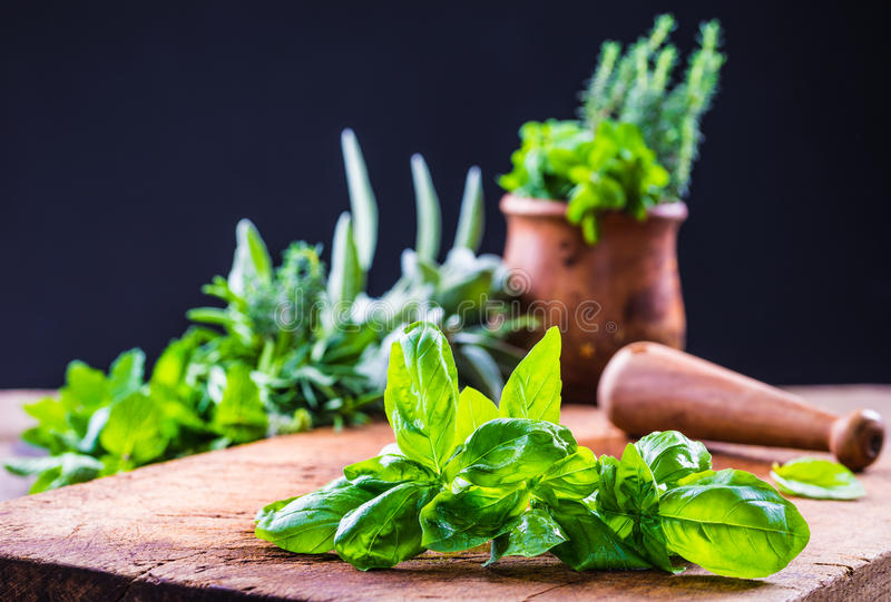 Fresh basil leaves and fresh herbs. royalty free stock images