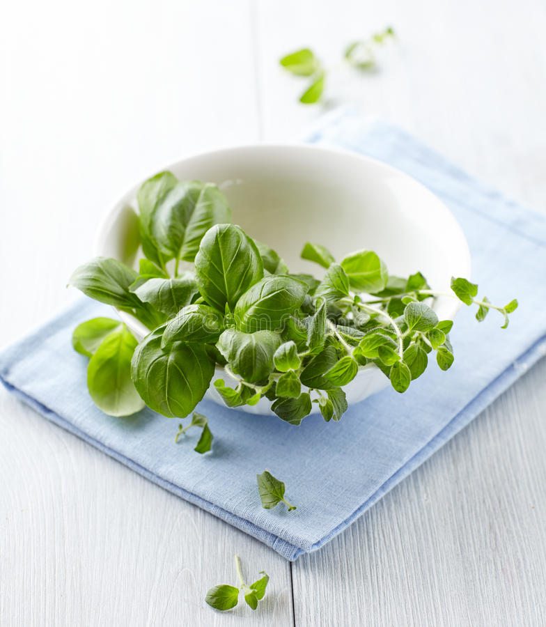 Fresh Basil And Oregano Stock Images
