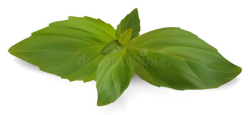 Download Fresh basil. stock vector. Image of garnish, cuisine - 32325352