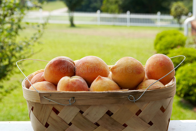 Fresh Basket royalty free stock images