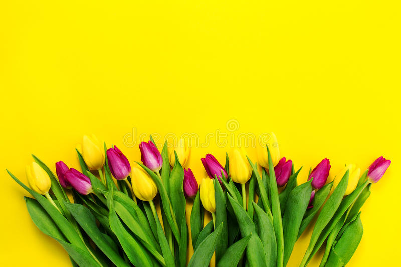 Fresh beautiful lila tulips on yellow colorful background. Spring concept. Horizontal, top view with copy space. stock photos