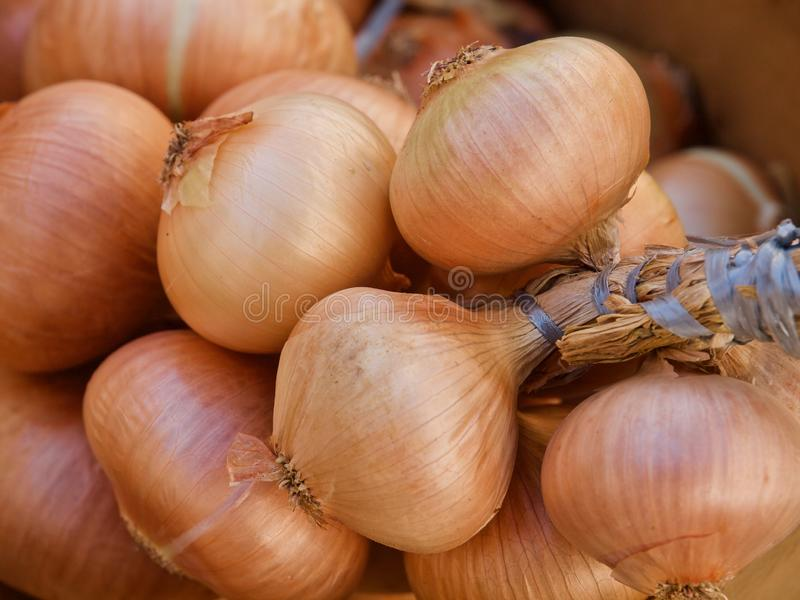 Pile of whole fresh onions on a food market in Portugal royalty free stock photos
