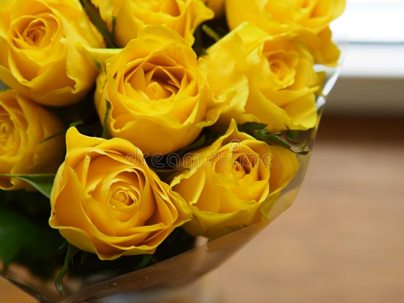 Fresh beautiful yellow rose flowers for background usage - Image. Fresh beautiful yellow rose flowers for background usage - . yi  camera, botanical, gift royalty free stock images