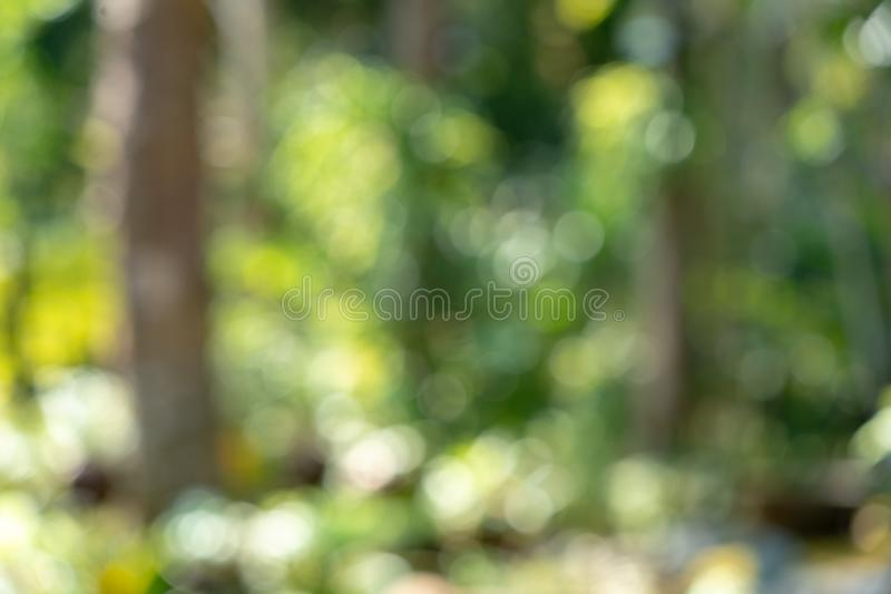 Fresh beautyful nature green tree blurry and bokeh background in the jungle. The fresh beautyful nature green tree blurry and bokeh background in the jungle stock images