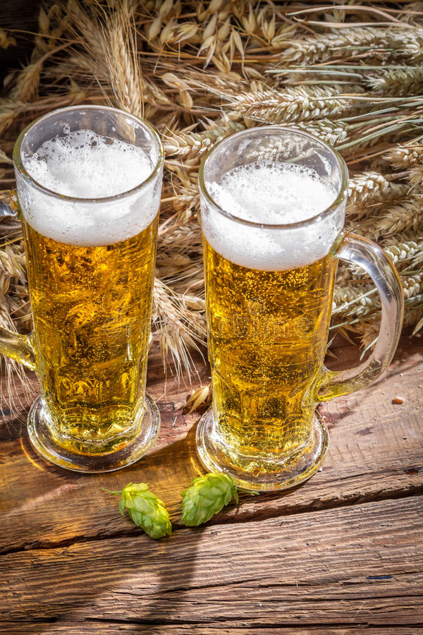 Fresh beer and hops surrounded by wheat royalty free stock image