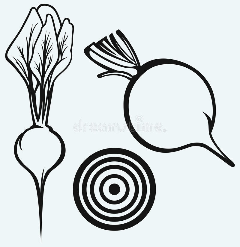 Fresh beetroot with leaves vector illustration