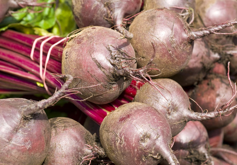 Fresh Beets. Bunch of fresh beet roots in a market royalty free stock photography