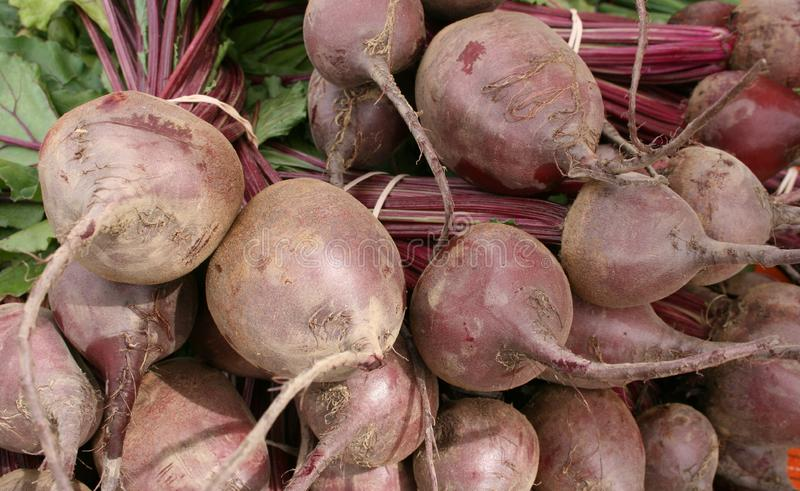Fresh Beets royalty free stock image