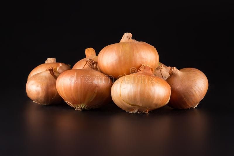 Fresh beige onions on a black background, beautifully photographed, photo for poster, banner. Fresh beige onions on a black background, beautifully photographed royalty free stock photography