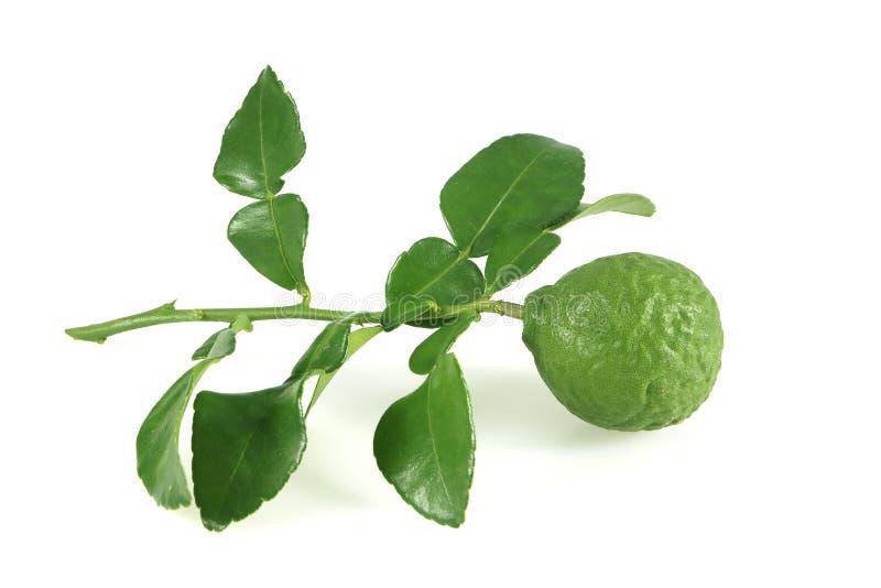 Fresh bergamot and  bergamot leaves isolated on white background. Fresh bergamot and bergamot leaves isolated on white background royalty free stock photos