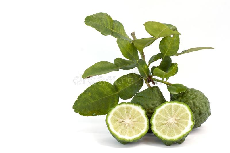 Fresh bergamot fruit with leaf is a vegetable and herb of Thailand used as an ingredient in cooking and herbal. Fresh whole and cut half bergamot fruit with leaf royalty free stock photography