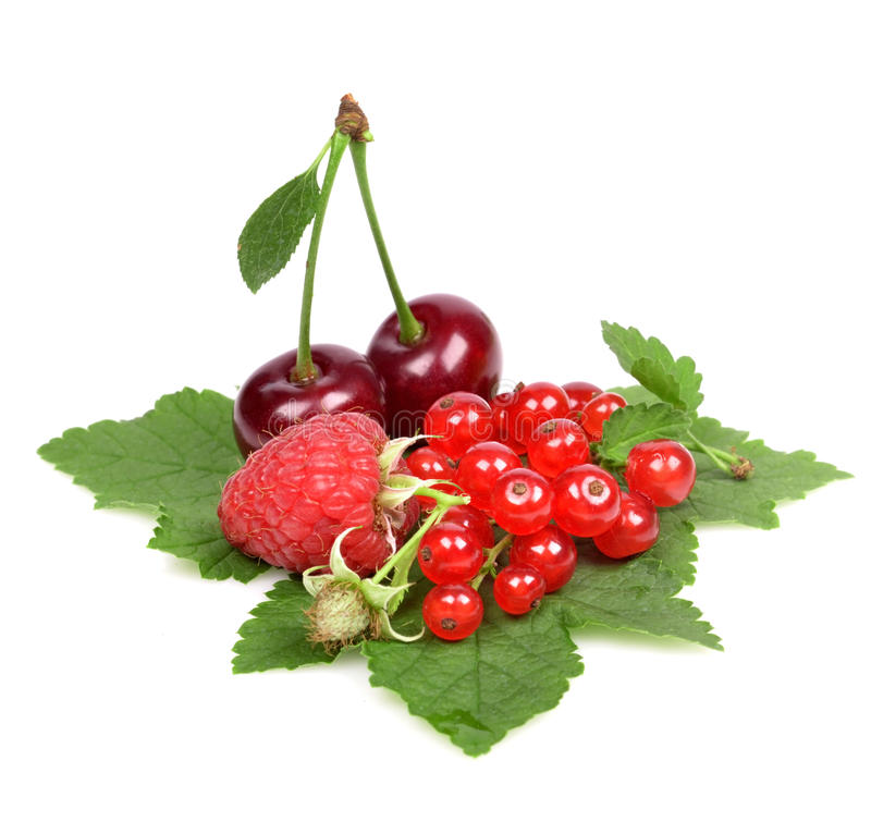 Fresh Berries Royalty Free Stock Images