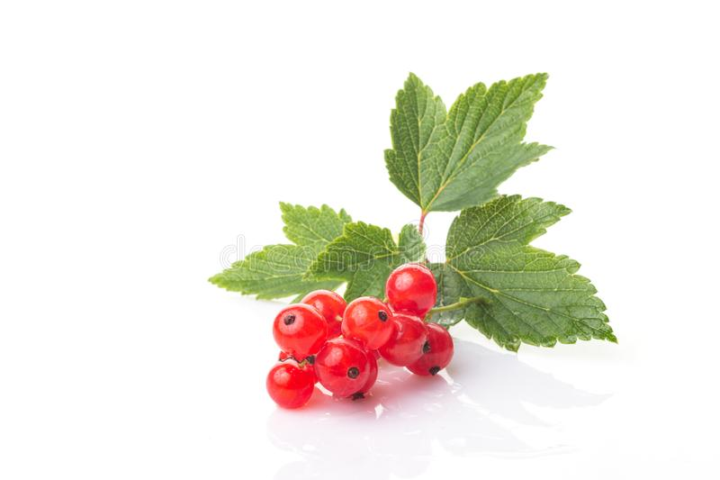 Fresh berries of red currant with green leaves isolated on white background royalty free stock images