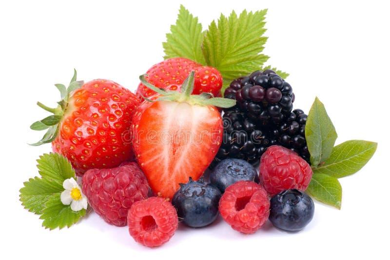 Download Fresh berries stock photo. Image of berries, dish, balanced - 41144140