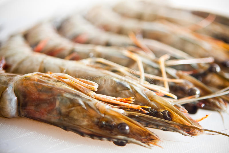 Fresh And Big Raw Tiger Prawn Royalty Free Stock Photos