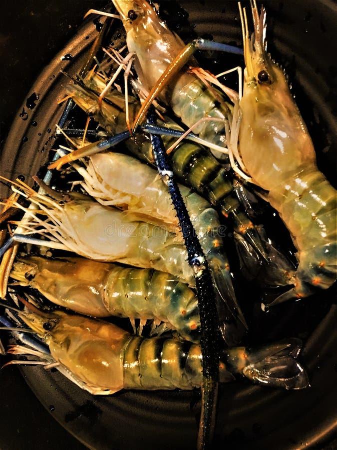 Fresh BIG shrimp in the dish.  royalty free stock photos