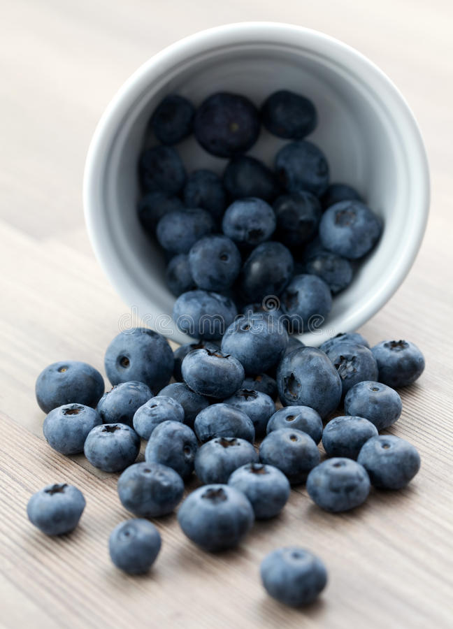 Download Fresh bilberry stock photo. Image of dessert, delicious - 16064378