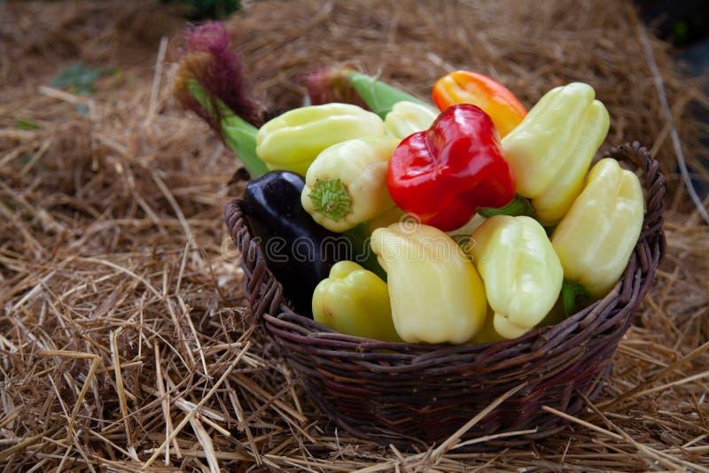 Fresh bio vegetables in a basket - red Californian pepper, eggplant, fresh corn, cob, yellow pepper, basket, kosh.  stock images