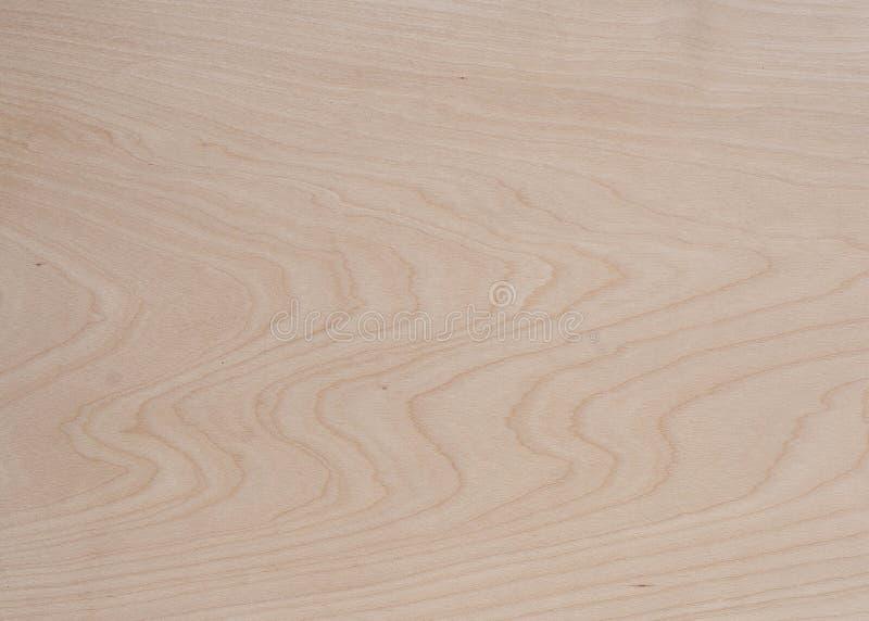 Birch tree wood texture stock photography