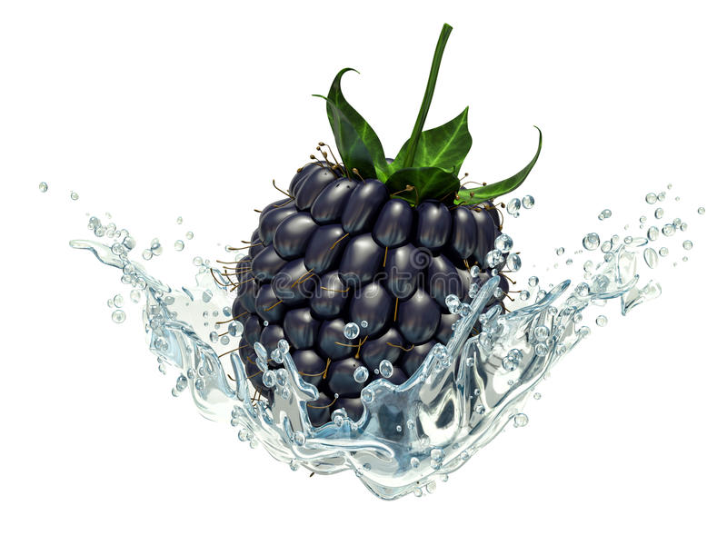 Fresh blackberry in water splash, isolated on white background.  royalty free illustration