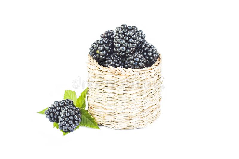 Fresh blackberry in wooden wicker basket, organic sweet black berry with leaf, healthy dessert food, closeup, isolated stock images