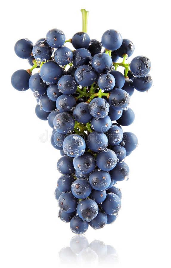 Free Fresh Blue Grape Cluster Isolated Fruit Royalty Free Stock Photos - 11019298