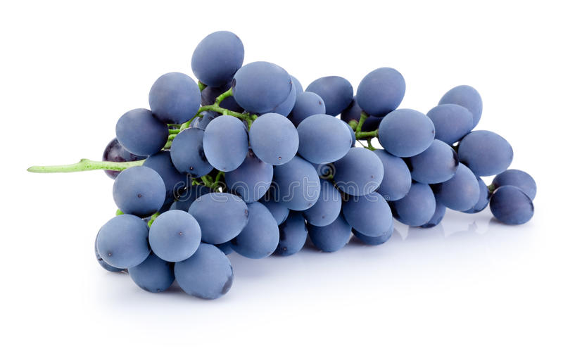 Fresh blue grapes isolated on white background stock photography