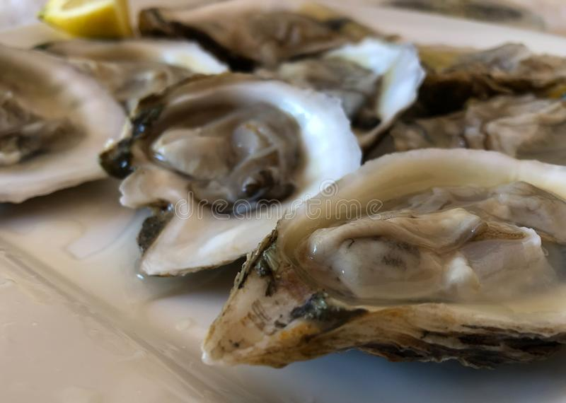 Fresh blue point oysters on the half shell served on white plate . Closeup. royalty free stock images