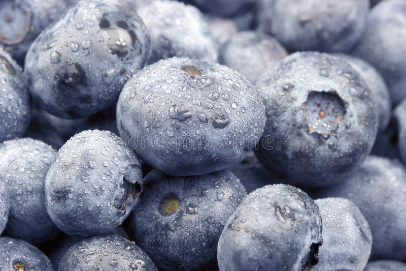 Download Fresh Blueberries Royalty Free Stock Image - Image: 2272276