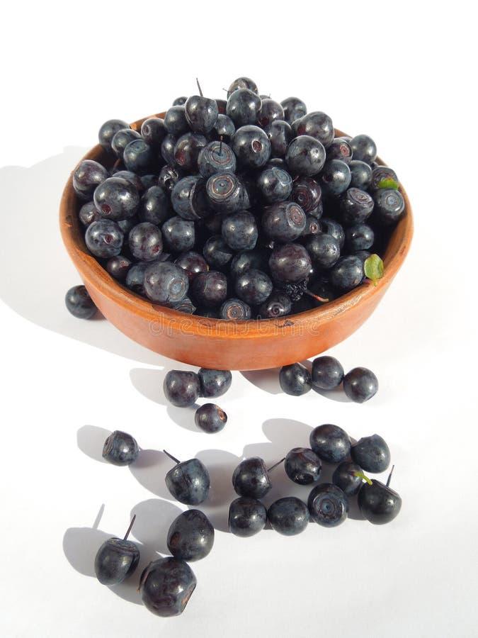 Download Fresh blueberries. stock image. Image of vitamin, fruit - 25446897