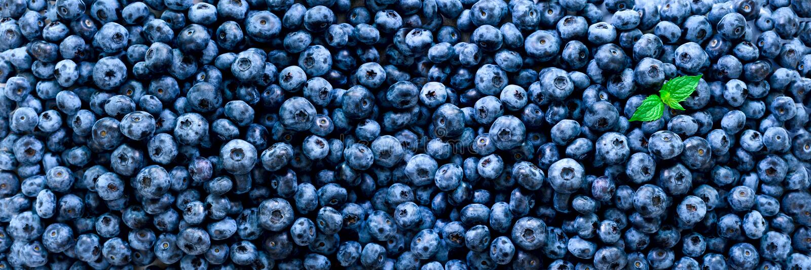Fresh blueberries background with copy space for your text. Border design. Vegan and vegetarian concept. Macro texture royalty free stock photos