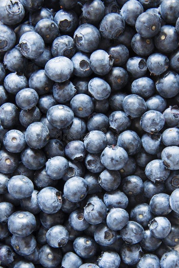 Fresh blueberries background stock photography