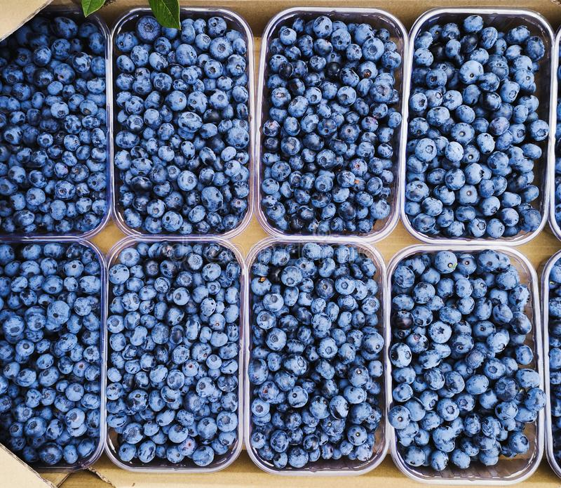 Fresh blueberries in plastic trays. Ripe blueberries in boxes. Berries of ripe blueberries on the market counter. Blueberries in plastic trays. Ripe blueberries royalty free stock photo