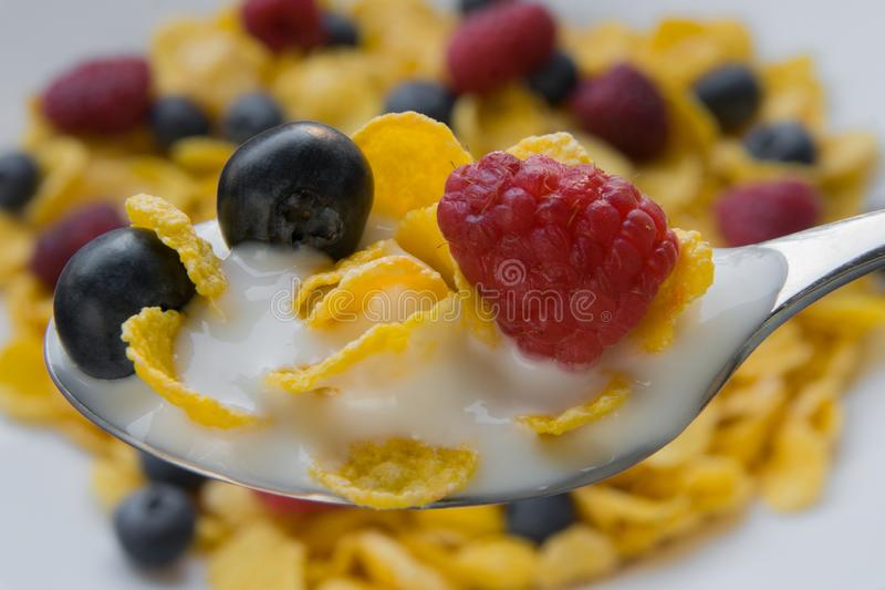 Fresh blueberries and raspberries with corn flakes with diet yogurt.  royalty free stock images