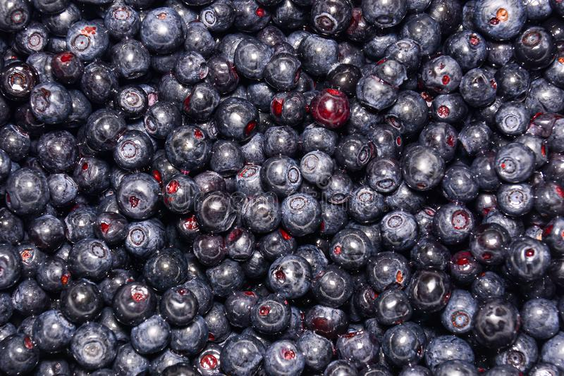 Fresh blueberry berries. A close-up. Natural background. Blueberries improve vision royalty free stock image