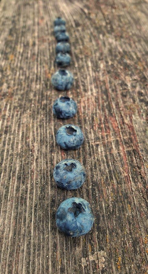 Fresh blueberry . Freshly picked blueberries royalty free stock photos